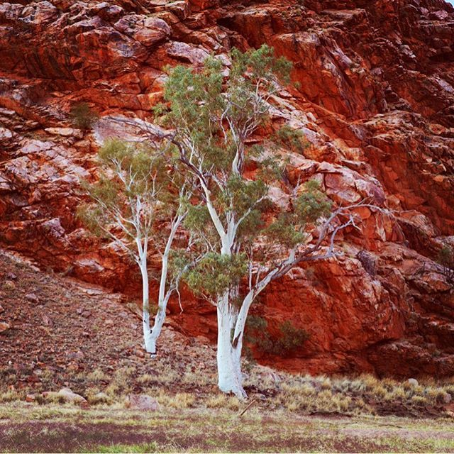 #isjon_isgood Contrasts  #northernterritory #australia #outback #australia #nature #alicesprings #treeporn #photography #locationscouting #dreamtime