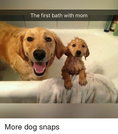 33 Hilarious Dog Pictures –