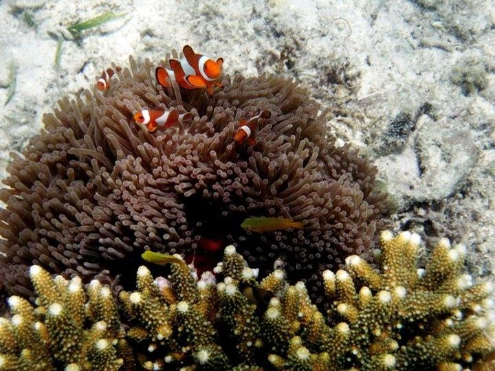 Underwater Kangean, Madura