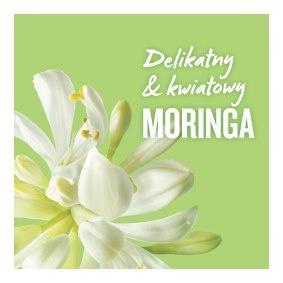 Kwiat  Moringa
