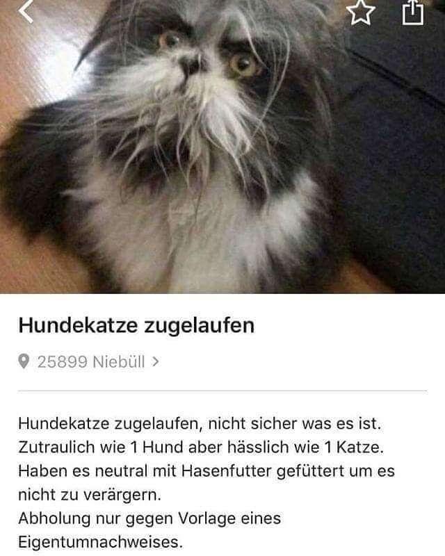 Bilderparade Dxxv Lustig Lustige Tiermemes Witzig