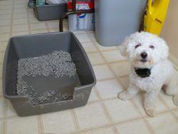 potty training dogs dog litter box puppies