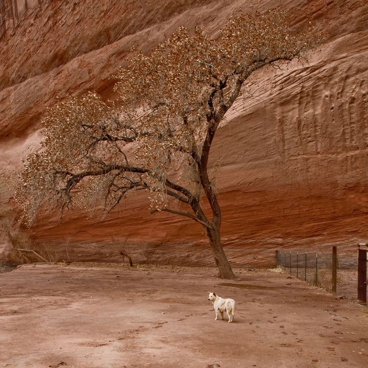 In Canyon de Chelly National Monument, in northeastern Arizona within the boundaries of the Navajo Nation. Photo #6 by Marc Tarlock.