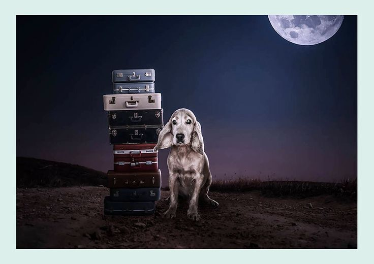 A few different pet rescues and shelters have been using Stuart Holyroyd dog rescue photography in their adoption and rescue campaigns to appeal to dog lovers from all over the country.