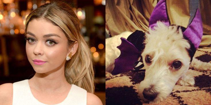 【ELLE】サラ・ハイランド|遂にはペットまで!? セレブの愛犬ハロウィンコスプレ13連発|エル・オンライン