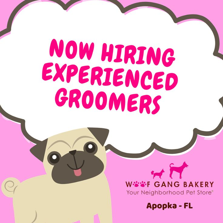 We're hiring W2 groomers for our busy grooming salon here