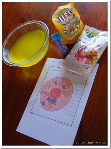 Together With Animal Cell Diagram Moreover How To Make 3d Plant Cell