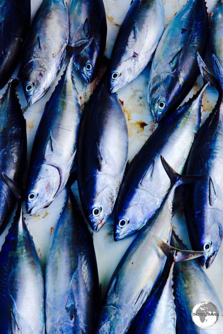 Tuna for sale on Maafushi.