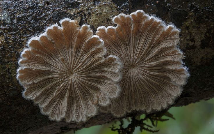 New Photos of Extremely Unusual Mushrooms and Other Fungi by Steve Axford