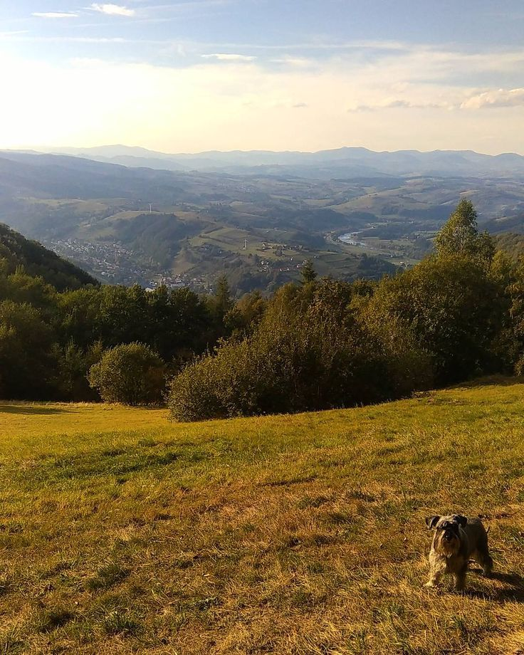Last day of vacation... #mountains #happytimes #autumn #dog #adventure