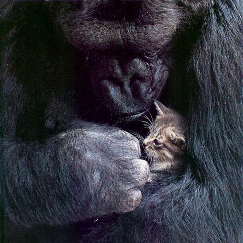 【閲覧注意】 チンパンジーが人間を食う時のやり方wwwwwwwwwwwwww|ラビット速報