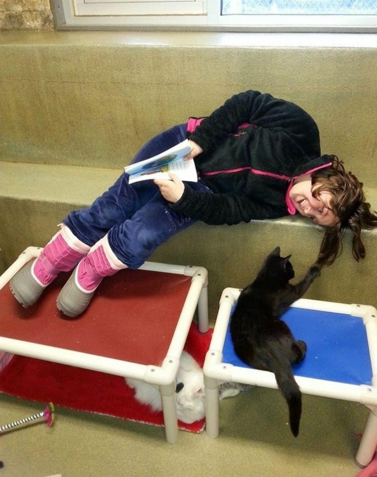 leitura_gatos08_planeta_bicho (Foto:  Divulgação/Animal Rescue League of Berks County)