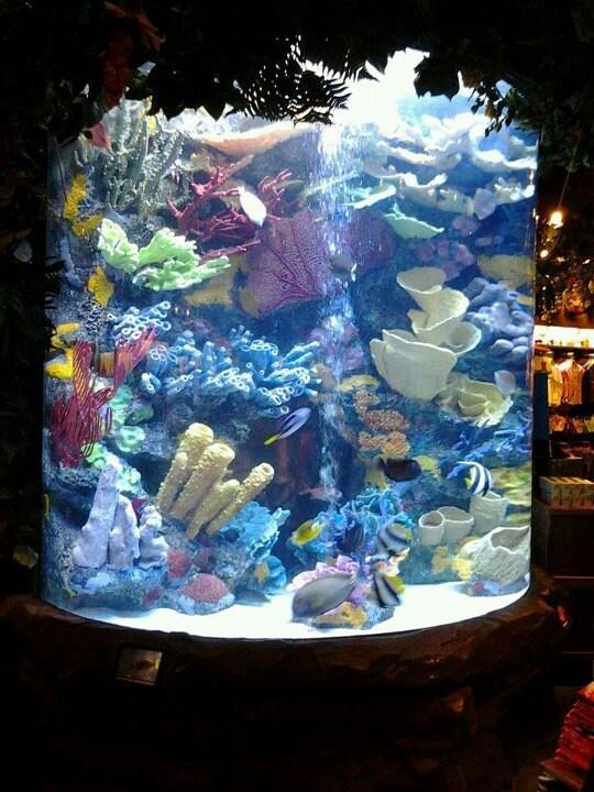 how to start a marine fish tank