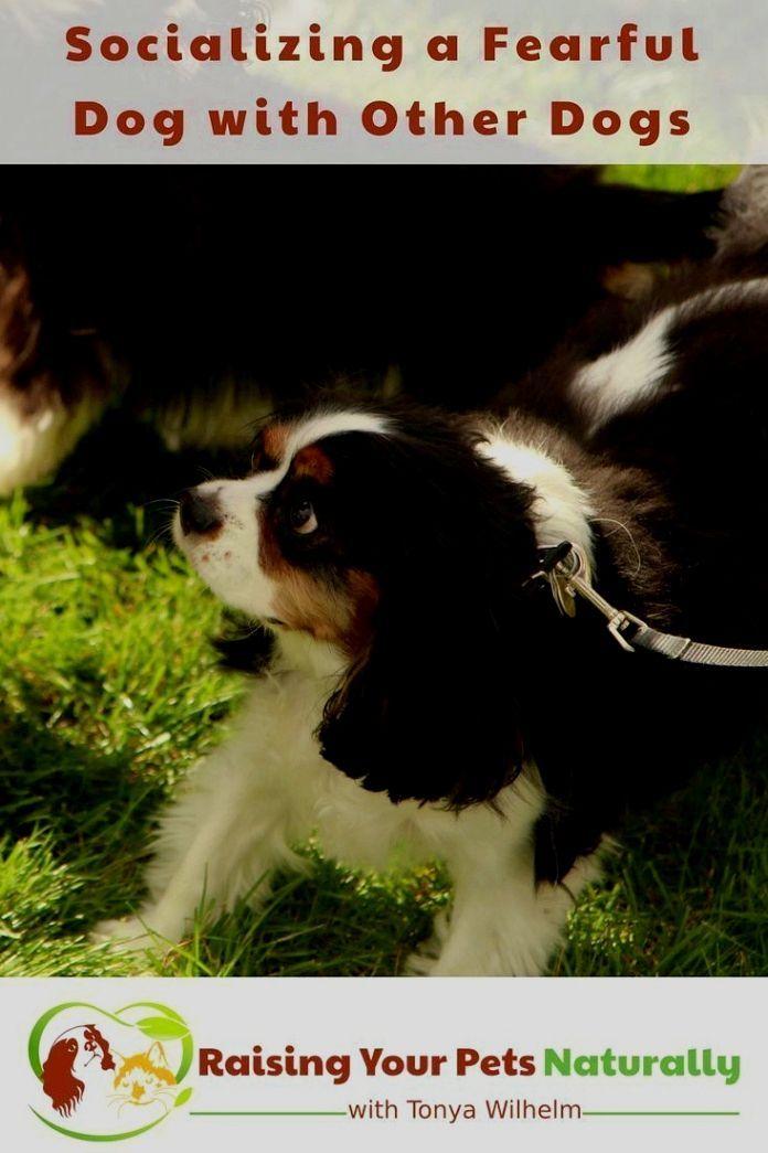 Pin On Quick Dog Training Tips
