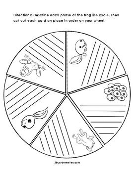 Best 25+ Life cycle of plants ideas on Pinterest