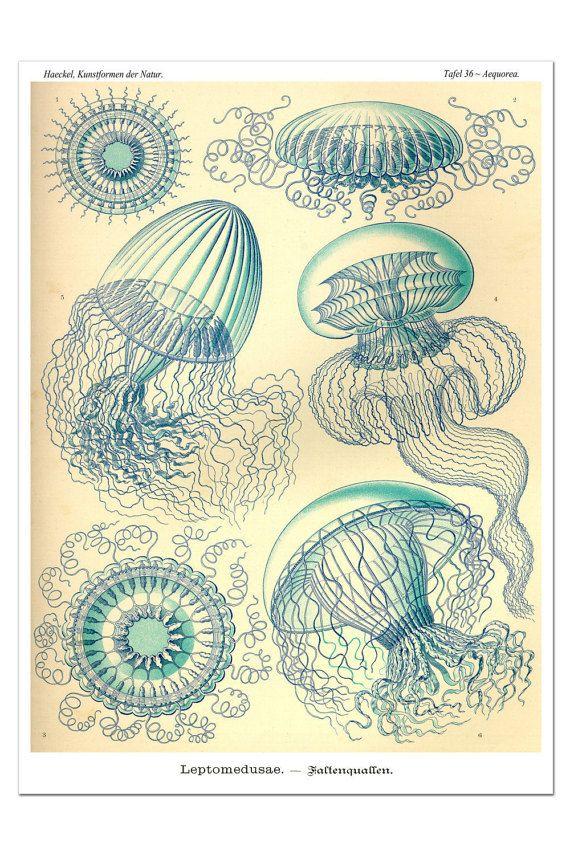 Quallen-Poster, Kunstdruck blaue Qualle, Geschenkidee, Ernst Haeckel Illustration, nautische Geschenke, Kunst Nouveau Wand hängend, Giclée-Druck