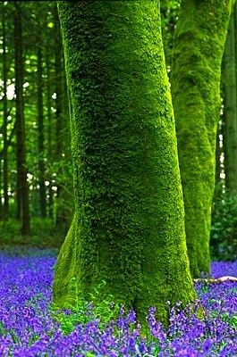 Contrast of bright green moss on tree trunks and vibrant blue plants at their…