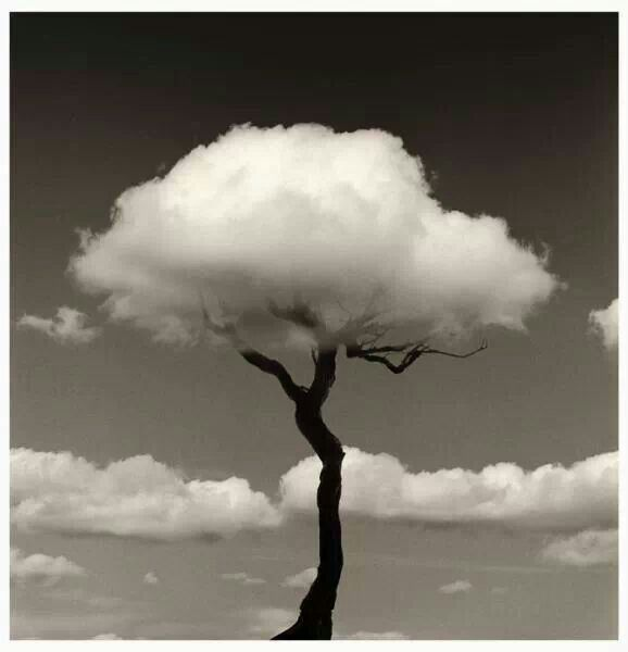 this is an example of Surrealism, but kind of visual metaphor such as the dying tress because of pollution completed by a passing cloud. It strongly reflect that human is ignoring the environment so that living things have to value themselves.