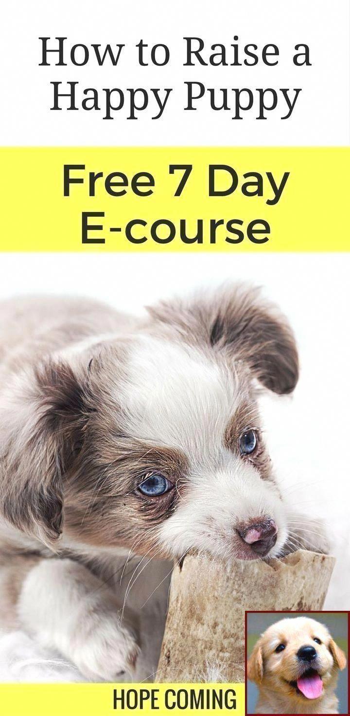 Pin On Loving Puppy Training