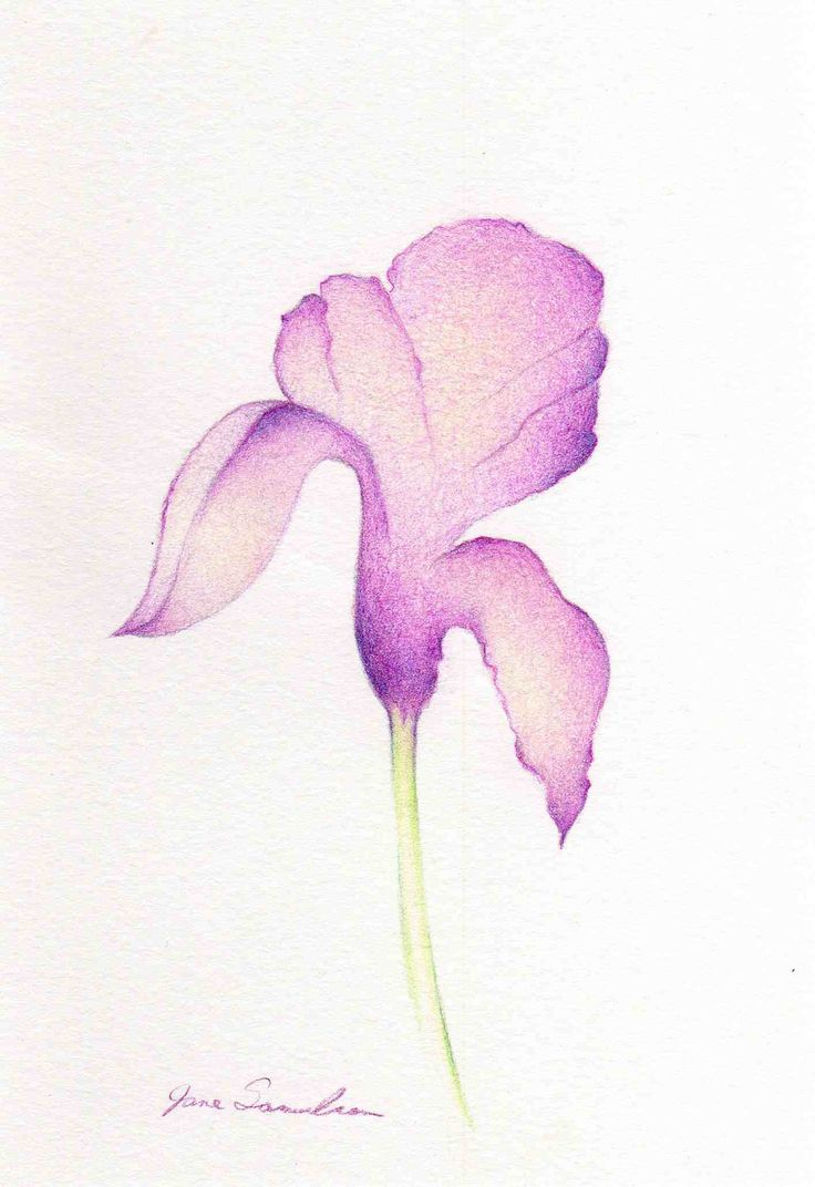 Spring Iris Too  Simple Drawing  Purple Iris Flower by artofjane, $15.00