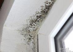 Plíseň na zdi, plíseň v bytě? Jak na ně? Definitivní tečku za plísněmi v interiéru i exteriéru představuje ETERNAL