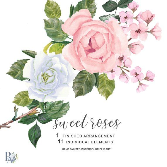 Watercolor Pink And White Roses Clipart Separate Elements Hand
