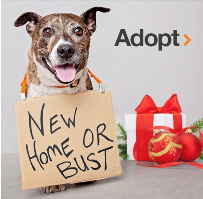Great adoption promotion ideas on Best Friends website includes: Love is Ageless, Single and Loving It (for pets needing to be the one and only) and Look On The Bright Side for white pets.