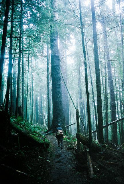 we found our true elders by Intrepidation, via Flickr Can't see the forest for the trees
