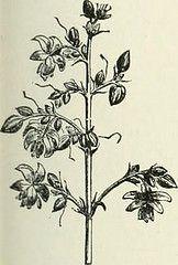Advantages of Buying Cheap Cannabis Seeds - http://herbalvaporizerpen.com/herb-vaporizer-pen/advantages-of-buying-cheap-cannabis-seeds-2