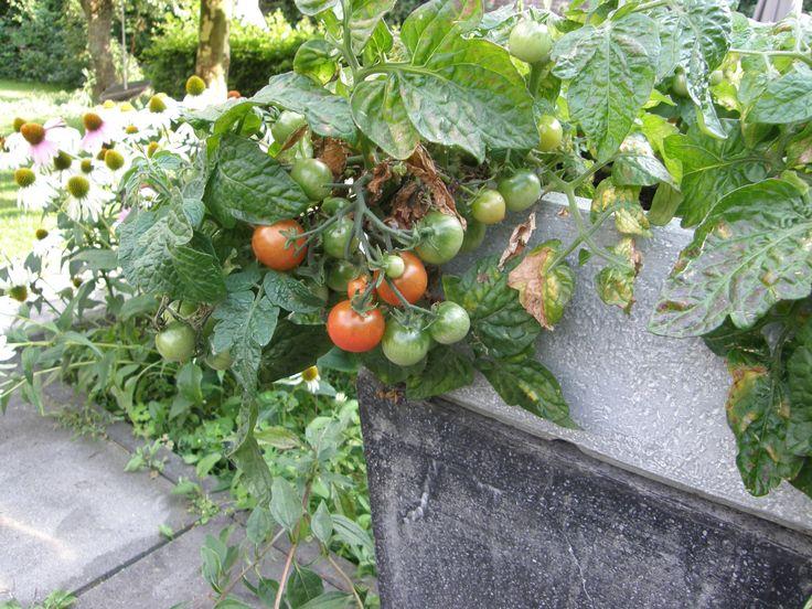 rode tomaten. Photography by Angelique van Haaren.