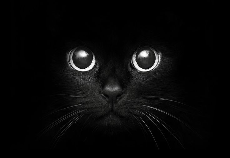 kitten in a dark