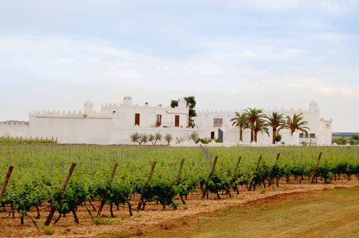 Masseria Surani  #Manduria #Puglia #vineyards www.tommasi.com