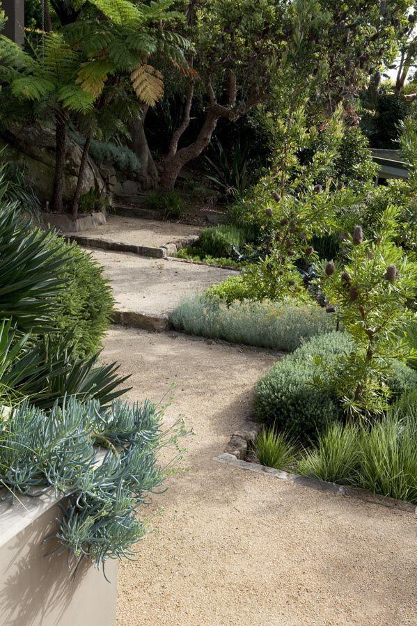 Groves of banksias Garden by #peterfudge