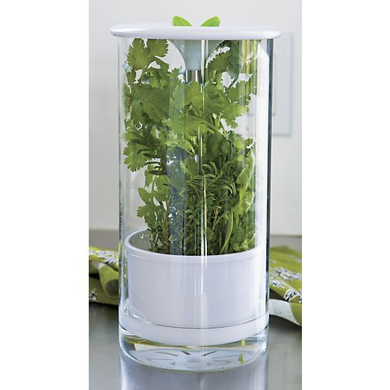Glass Herb Keeper in Food Containers, Storage   Crate and Barrel