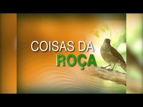 COISAS DA ROÇA -  Modas de Viola - Raizes Sertanejas - Musicas Caipira