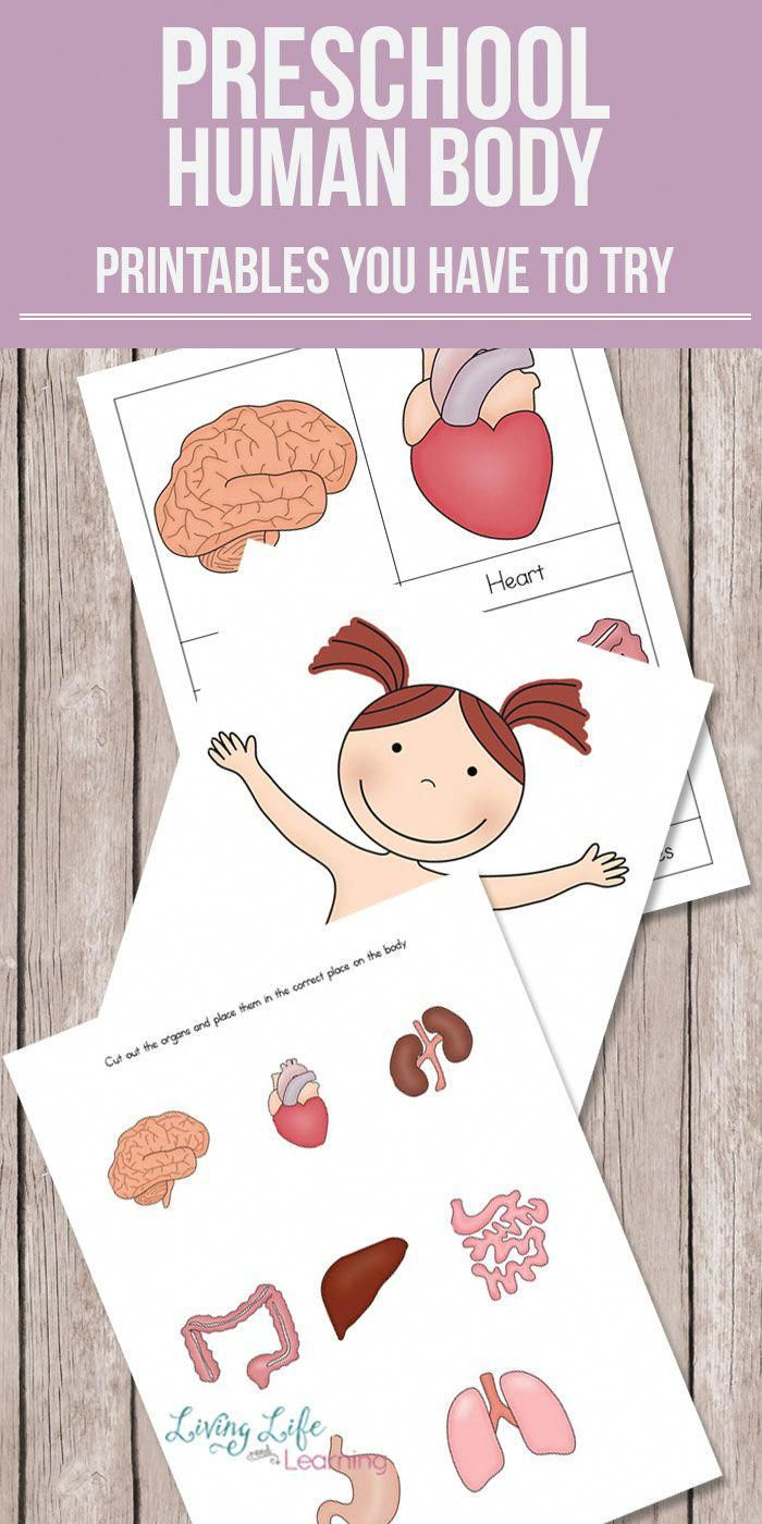 Want To Learn About The Human Body But Don T Know Where To Start Get These Preschool Human Body Prin Body Preschool Preschool Activities Human Body Printables [ 1400 x 700 Pixel ]