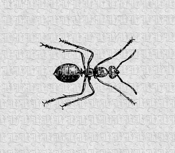 Small Insect Black Ant Vintage Clip Art by luminariumgraphics, $2.20