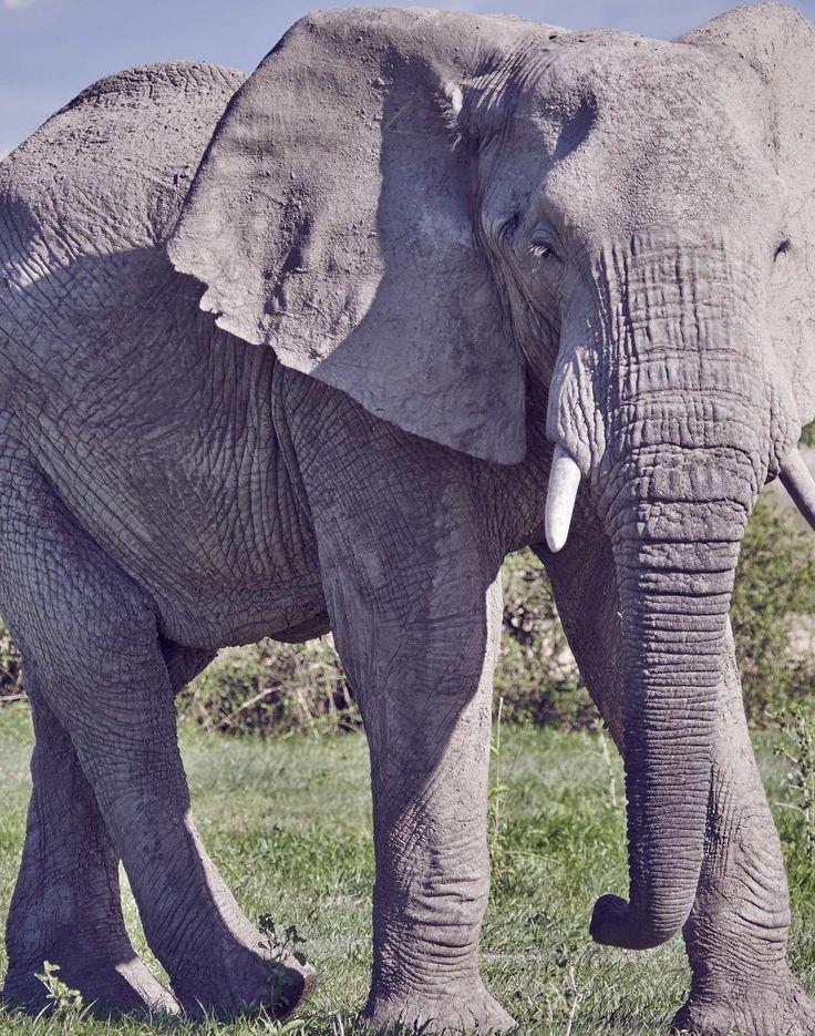 Beautiful #Africa #SaveOurElephants #SayNoToIvory