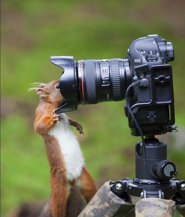 Squirrel - I could take pictures of squirrels all day - clearly this one doesn't mind a close up