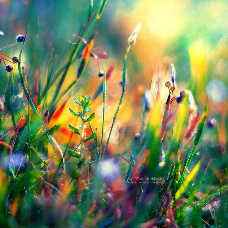 Little Worlds by John-Peter.deviantart.com on @DeviantArt