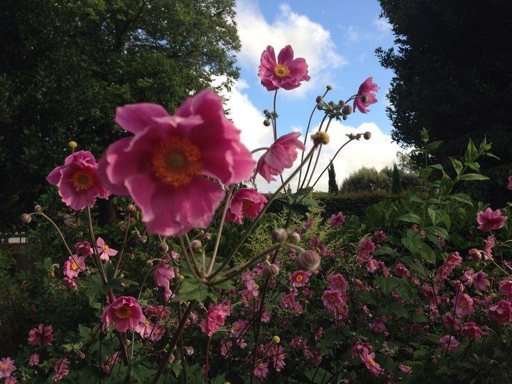 Pink flower sky