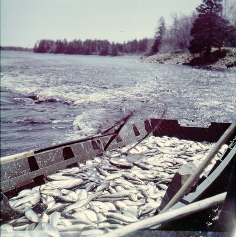 Kiacking on Tusket River   Flickr - Photo Sharing!
