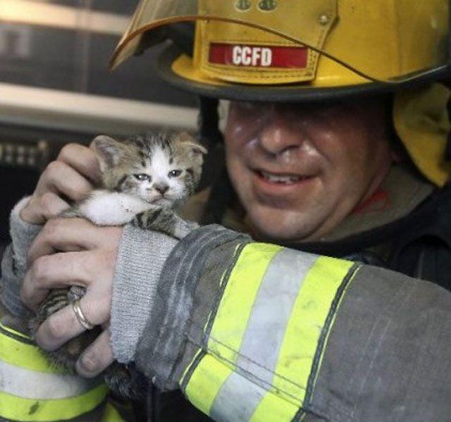 【画像】猫を火災現場から救出した消防士たちの写真12枚:小太郎ぶろぐ