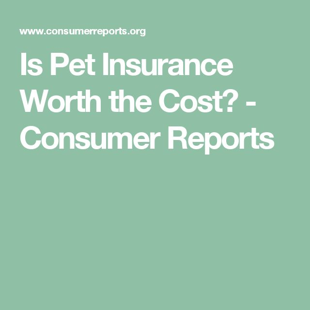 Is Pet Insurance Worth the Cost?  - Consumer Reports