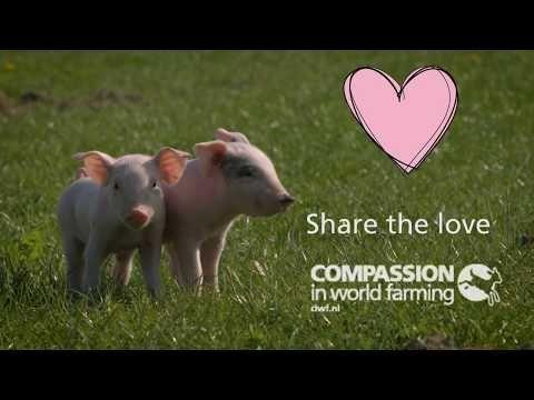 Moederdagprotest 'Moeders voor moedervarkens' tegen kraamkooien    Compassion in World Farming Nederland