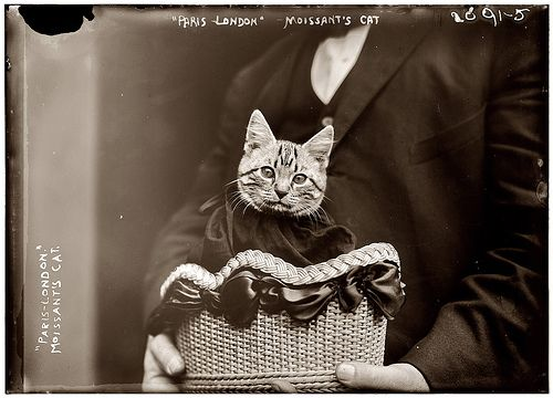 1910    In 1910, on the first airplane flight across the English Channel to carry a passenger, American aviator John Moisant flew from Paris to London accompanied by both his mechanic and his cat, named either Boo Radley or Butter, depending on which newspaper you believe.: Paris, New Orleans, Funny Cat, White Christmas, Airplane Flight, Baskets, Flying Cat, American Aviator, English Channel