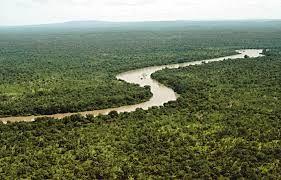 Bosque tropical. De Wikipedia, la enciclopedia libre