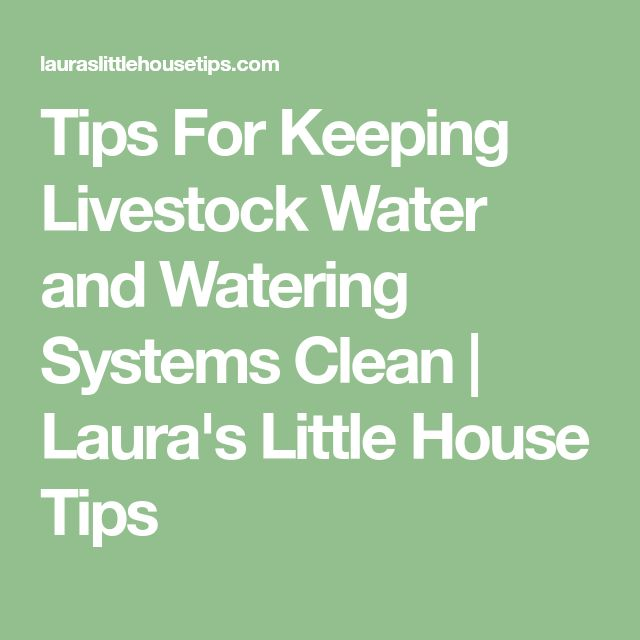 Tips For Keeping Livestock Water and Watering Systems Clean | Laura's Little House Tips