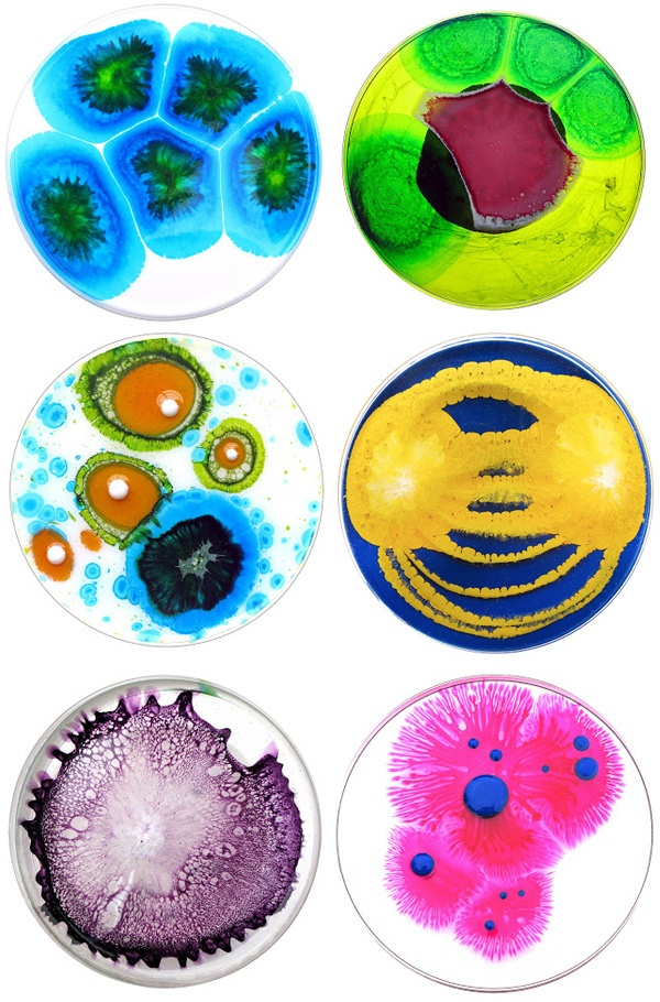 petri dish #art