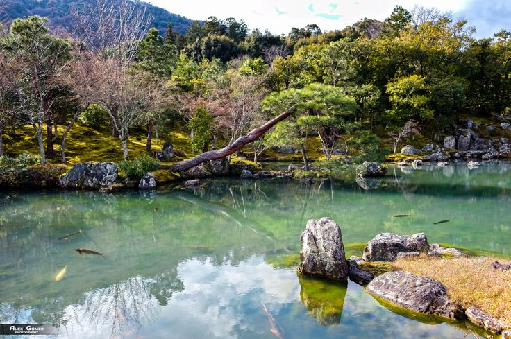 Japanese Garden - A beautiful view of the garden of the Tenryu-ji Temple with crystal clear waters full of fish in its pond